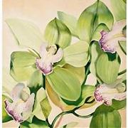 1136 Orchids, 69x53, Canvas, Oil,